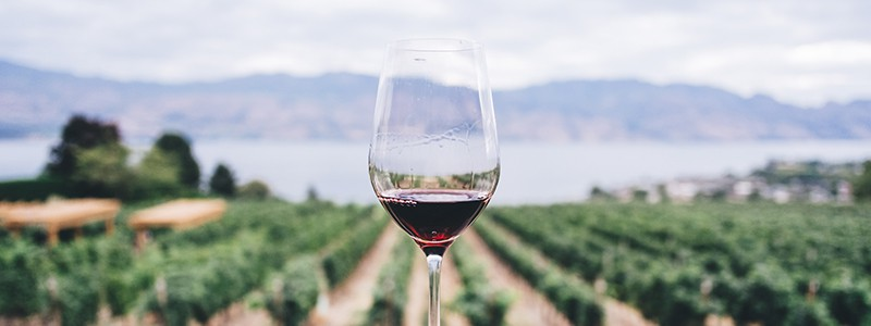 Red wine in glass at vineyard